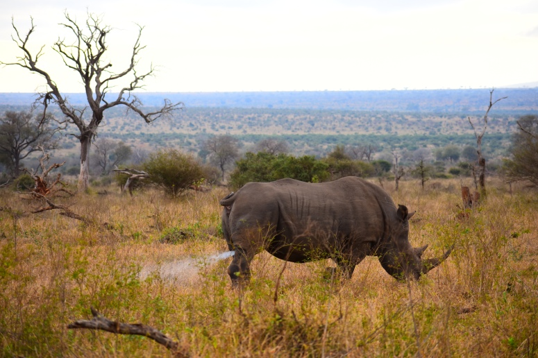 Kruger Rhino Spray